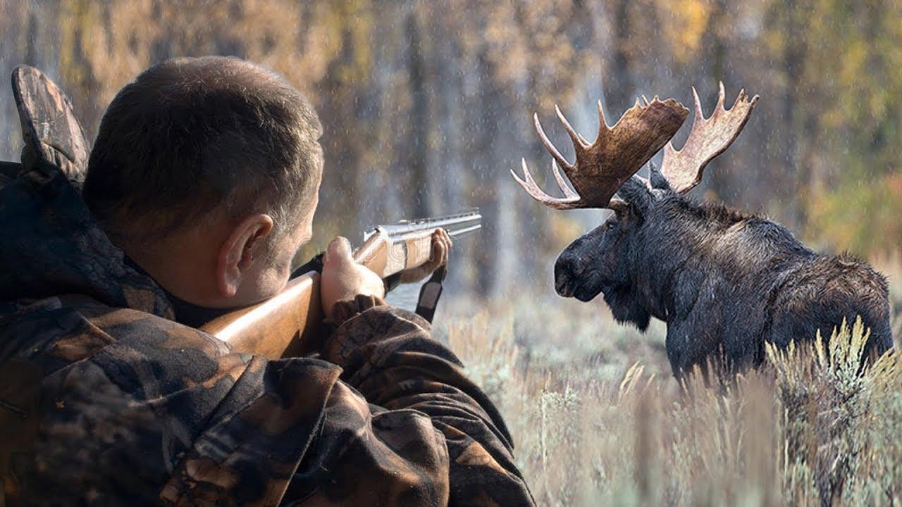 Разрешения на охоту на копытных в Новосибирской области будут распределены методом случайной выборки