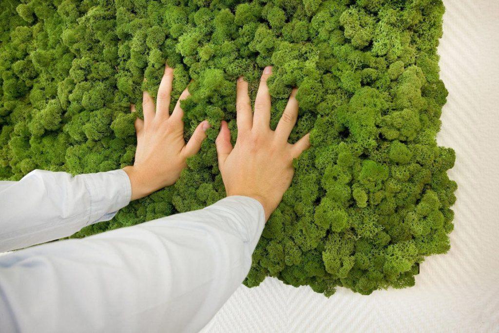 Изображение - Бизнес в лесу status-media.com_eilat-7295890-1024x683